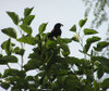 Nature_bird_3