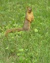 Nature_squirrel_curious