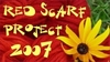 Red_scarf_project_2